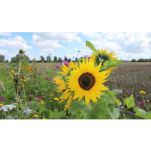 Bloemenmengsel akkerranden 1-jarig – 1kg (≈ ca. 400m2)