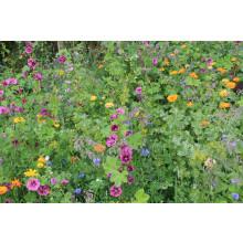 Bijenmengsel / Bloemenmengsel akkerranden meerjarig 1kg (≈ ca. 440m2)